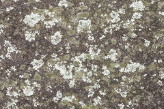 Mint and Green Colored Lichen on a Grey Rock Wall. Textured background of mint and green colored crustose lichen and bright green moss on a dark grey rock wall royalty free stock photo