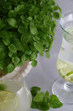 Mint grown in a flower pot on a table in a drink Royalty Free Stock Image