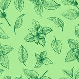 Mint hand sketch vector seamless texture. Mint hand sketch vector illustration seamless texture. Peppermint engraved drawing of menthol leaves isolated on white Royalty Free Stock Photos