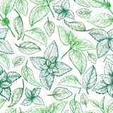 Mint hand sketch vector seamless texture. Mint hand sketch vector illustration seamless texture. Peppermint engraved drawing of menthol leaves isolated on white Royalty Free Stock Image
