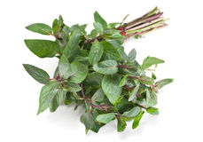 Mint herb Royalty Free Stock Images