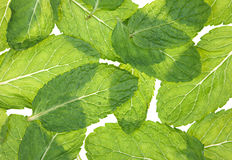 Mint herb background. Fresh green mint herb leaf closeup background royalty free stock photo