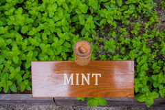 Mint herb board Royalty Free Stock Image
