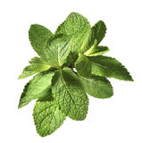 Mint herb bunch  on white background Stock Image