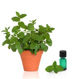 Mint Herb and Essence Stock Photography