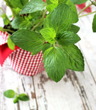 Mint herb growing in a pot on wooden Royalty Free Stock Photos