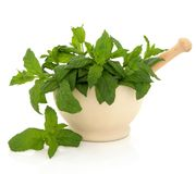 Mint Herb Leaves Royalty Free Stock Photos