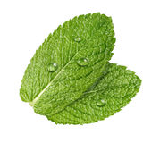 Mint herb leaves water drops isolated on white background Royalty Free Stock Photo