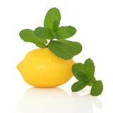 Mint Herb and Lemon Fruit Royalty Free Stock Photos