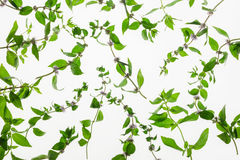 Mint herb pattern isolated on white background Royalty Free Stock Photography