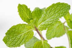 Mint herb Stock Photo