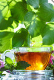 Mint herbal tea Royalty Free Stock Photo