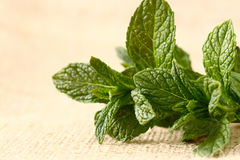 Mint hessian 2 Stock Photo