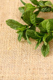 Mint hessian 4 Stock Photo