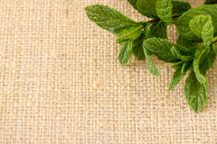 Mint hessian 3 Royalty Free Stock Photography