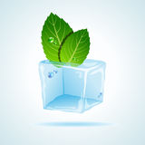 Mint in ice Stock Photos