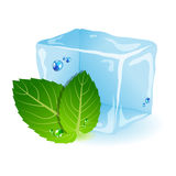 Mint with ice. Vector picture with ice and mint leaf Stock Photography