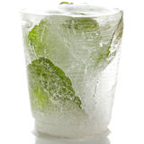 Mint in ice Royalty Free Stock Image