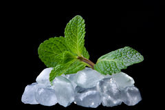 Mint in the ice Stock Images