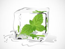 Mint in ice cube Royalty Free Stock Photos