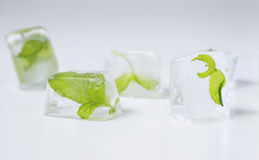 Mint in ice cubes close up Royalty Free Stock Photography