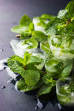 Mint ice cubes with fresh mint Stock Photos