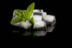 Mint and ice cubes Royalty Free Stock Image