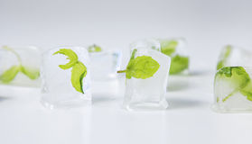 Mint in ice cubes on white Stock Photography