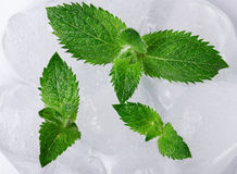 Mint and ice Stock Photo