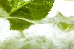 Mint ice vodka Royalty Free Stock Images
