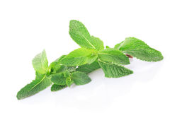 Mint isolated Royalty Free Stock Image