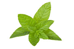 Mint On isolated white Stock Photography