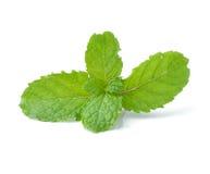 Mint isolated on white background Stock Photos