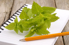 Mint on a kitchen notebook Stock Images
