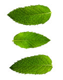 Mint leaf Royalty Free Stock Images