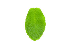 Mint leaf. Single mint leaf over white background royalty free stock photo