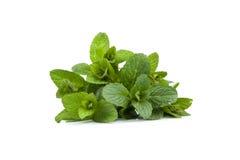 Mint leaf. Close-up - isolated on White Background royalty free stock photo