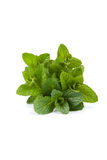 Mint leaf. Close-up - isolated on White Background royalty free stock images