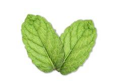 Mint Leaf Royalty Free Stock Photos