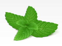 Mint leaf. With drops isolated Stock Photos