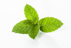 Mint leaf. Isolated on white background royalty free stock photography