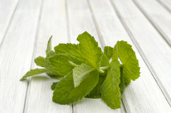 Mint leaf Royalty Free Stock Photo