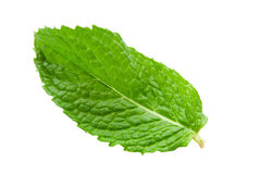 Mint Leaf. On an isolated white background stock image