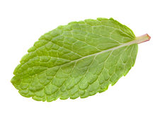 Mint leaf Royalty Free Stock Image