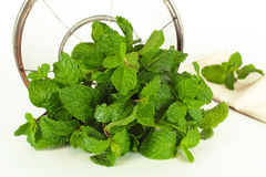 Mint leaf, aromatic herbs Royalty Free Stock Photos
