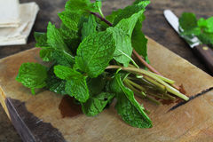 Mint leaf, aromatic herbs Royalty Free Stock Images
