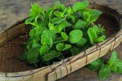 Mint leaf, aromatic herbs Stock Photos