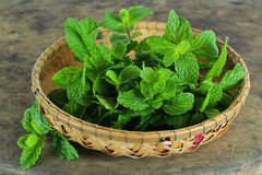 Mint leaf, aromatic herbs Stock Images