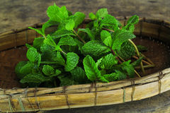 Mint leaf, aromatic herbs Royalty Free Stock Photo