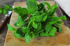 Mint leaf, aromatic herbs Stock Photo